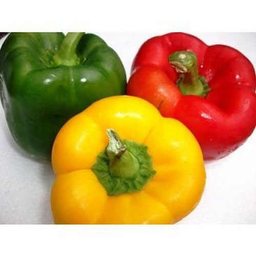CAPSICUM 'Sweet Delight' Mixed / Bell Pepper mix - Boondie Seeds