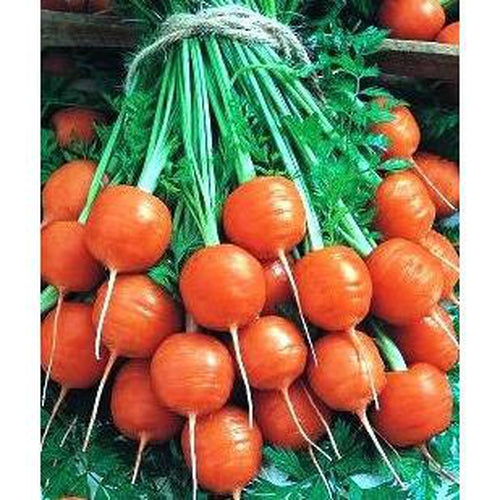 CARROT 'Mercado De Paris' 100 seeds - Boondie Seeds