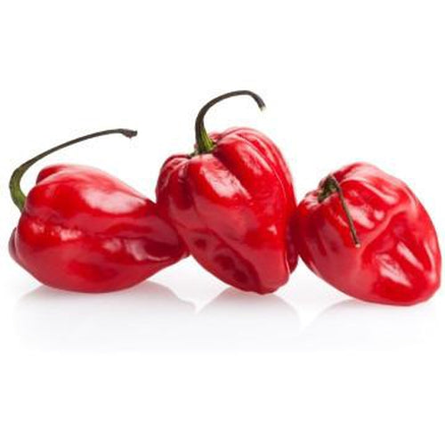 CHILLI 'Habanero Red' - Boondie Seeds