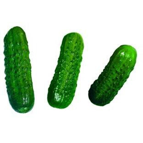 CUCUMBER 'Boston Pickling Gherkin' Pickles - Boondie Seeds