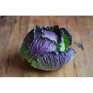 CABBAGE 'January King' ORGANIC - Boondie Seeds