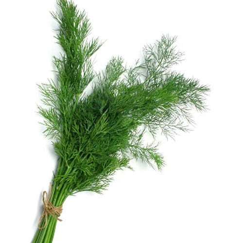 Dill 'Mammoth' - Boondie Seeds
