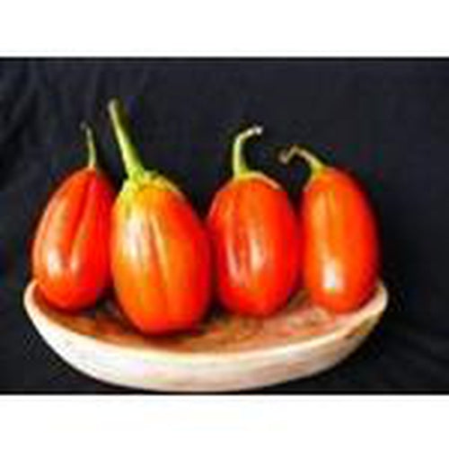 EGGPLANT 'Red Square' seeds