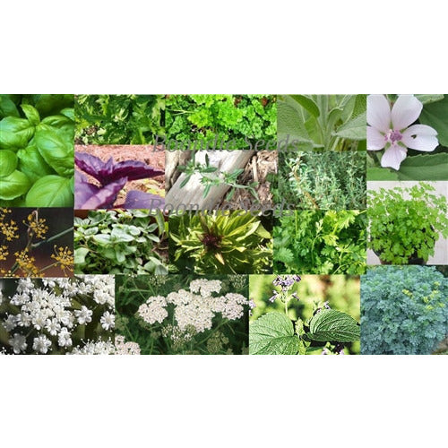 UNUSUAL HERB PACK 22 x PACKETS of herb seeds MEDICINAL and CULINARY collection