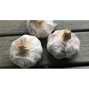 GARLIC BULBS -  Tasmanian Purple - Boondie Seeds