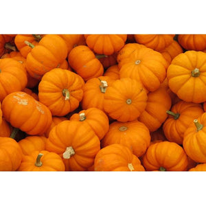 PUMPKIN COLLECTION 8 PACKETS - Boondie Seeds