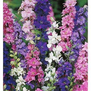 LARKSPUR  'Imperial Giants Mix' seeds