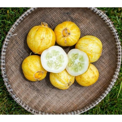 CUCUMBER 'Lemon' *Organic* seeds