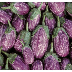 EGGPLANT 'Greek Tsakoniki' - Boondie Seeds