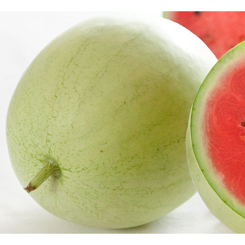 WATERMELON 'Mickylee'