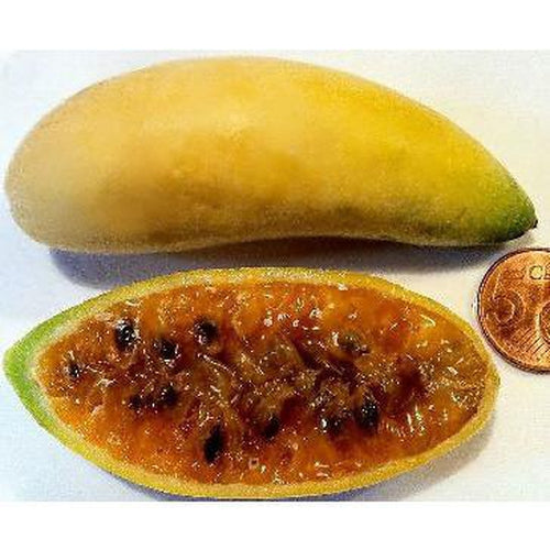 PASSIONFRUIT 'Banana' seeds