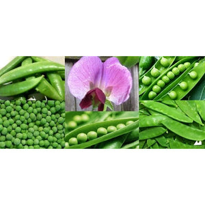 PEA 'Heirloom Mix' - Boondie Seeds