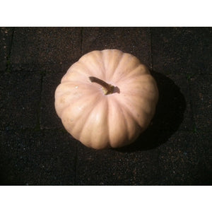 PUMPKIN 'Long Island Cheese' - Boondie Seeds