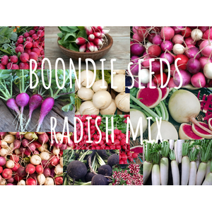 RADISH 'Heirloom Mix' - Boondie Seeds