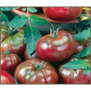 TOMATO 'Black from Tula' - Boondie Seeds