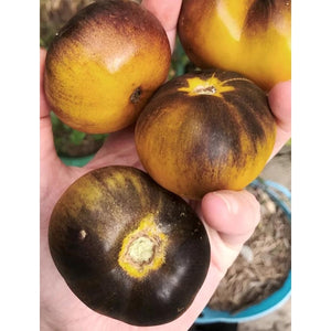 TOMATO 'Green and Black' - Boondie Seeds