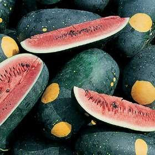 WATERMELON 'Moon and Stars'