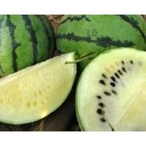 WATERMELON 'Cream of Saskatchewan' *ORGANIC* 10 seeds RARE