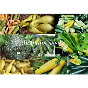 ZUCCHINI 'Heirloom Mix' - Boondie Seeds