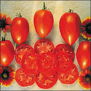 TOMATO 'Amish Paste' - Boondie Seeds