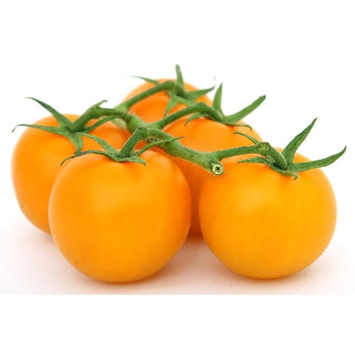 TOMATO 'Yellow Grosse Lisse'