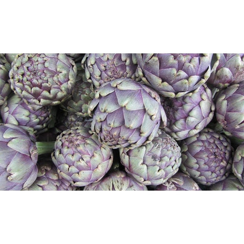 Artichoke Purple Headed