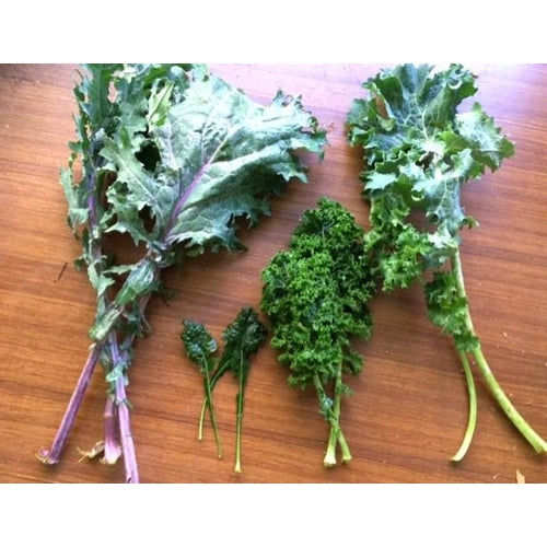 KALE VARIETY PACK - 8 packets