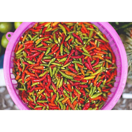CHILLI 'Tabasco' - Boondie Seeds