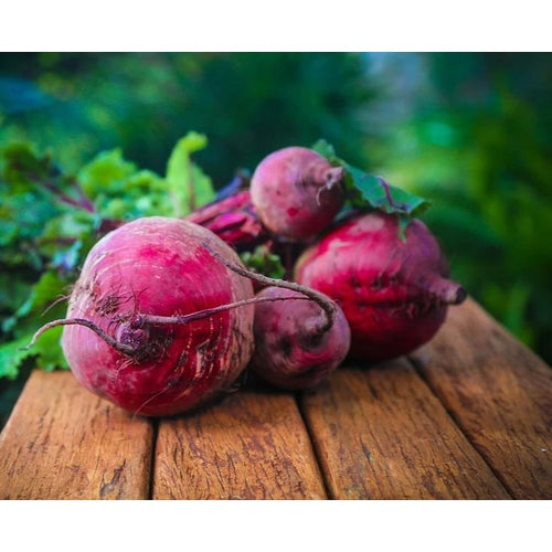 BEETROOT 'Bulls Blood'