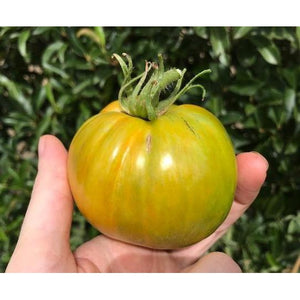 TOMATO 'Green Berkeley Tie Die' - Boondie Seeds