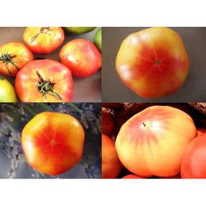 TOMATO 'Big Rainbow' - Boondie Seeds