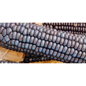 CORN 'Blue Hopi' - Boondie Seeds