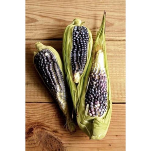 CORN 'Heirloom Mix' - Boondie Seeds