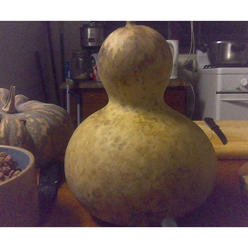 GIANT BOTTLE GOURD - Boondie Seeds