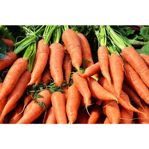 CARROT 'Chantenay Red Cored' - Boondie Seeds