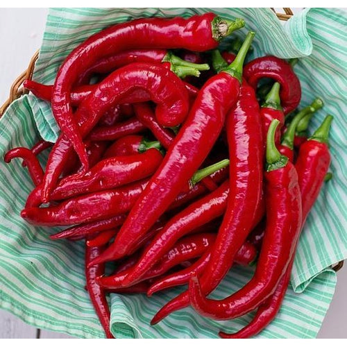 CAPSICUM 'Jimmy Nardello' / Sweet Pepper - Boondie Seeds