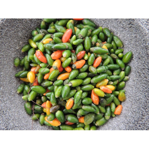 CHILLI 'Yellow Jelly Bean' ORGANIC - Boondie Seeds