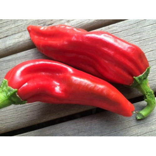 CHILLI 'Big Jim' seeds