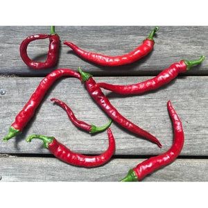 CHILLI 'Cayenne Red Slim' - Boondie Seeds