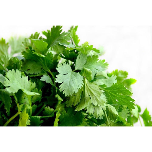 CORIANDER 'Lemon' - Boondie Seeds