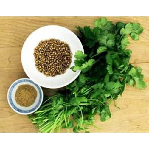 CORIANDER 'Hacor' / HOT + SPICY - Boondie Seeds