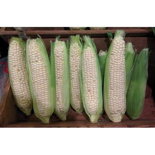 CORN 'Manning White' - Boondie Seeds