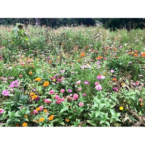 COTTAGE GARDEN MIX - Boondie Seeds