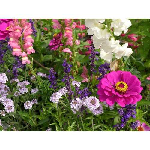 EASY GROW FLOWER GARDEN PACK / 12 packets