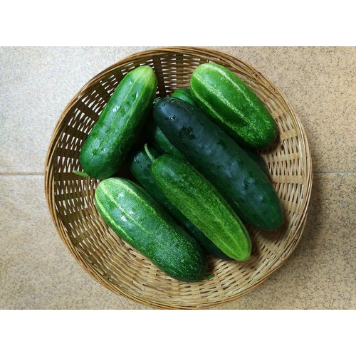 CUCUMBER 'Marketmore 76'