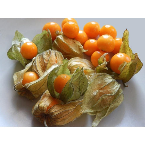 CAPE GOOSEBERRY / GROUND CHERRY / PHYSALIS