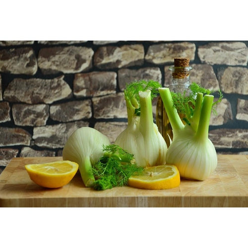 FENNEL 'Florence'