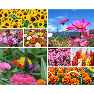 EASY GROW FLOWER GARDEN PACK / 12 packets of seeds