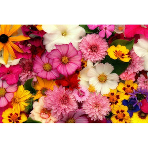 COTTAGE GARDEN MIX - Flower seeds