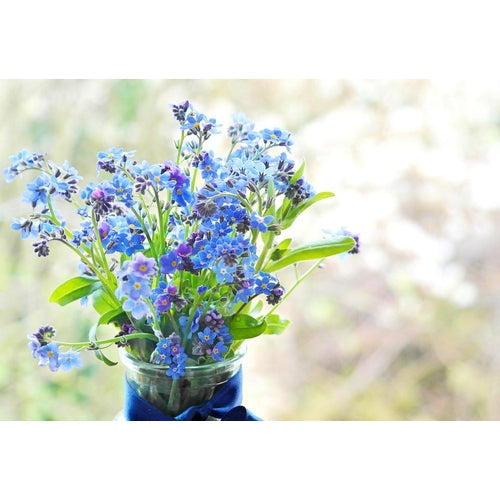 FORGET ME NOT SEEDS Wholesale Gift Pack - Boondie Seeds